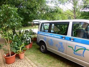 Pflanzen auf Reisen